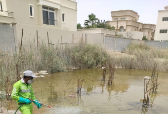 Tadweer steps up measures to control disease-carrying pests at construction sites in Abu Dhabi