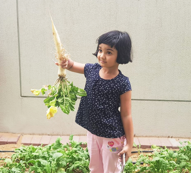 Wasl Properties and Emrill are working to transform concreted frontages and vacant sand areas within Dubai residential communities into vegetable gardens.